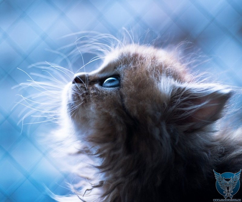 котенок Дэйзи - новые фотографии 2017