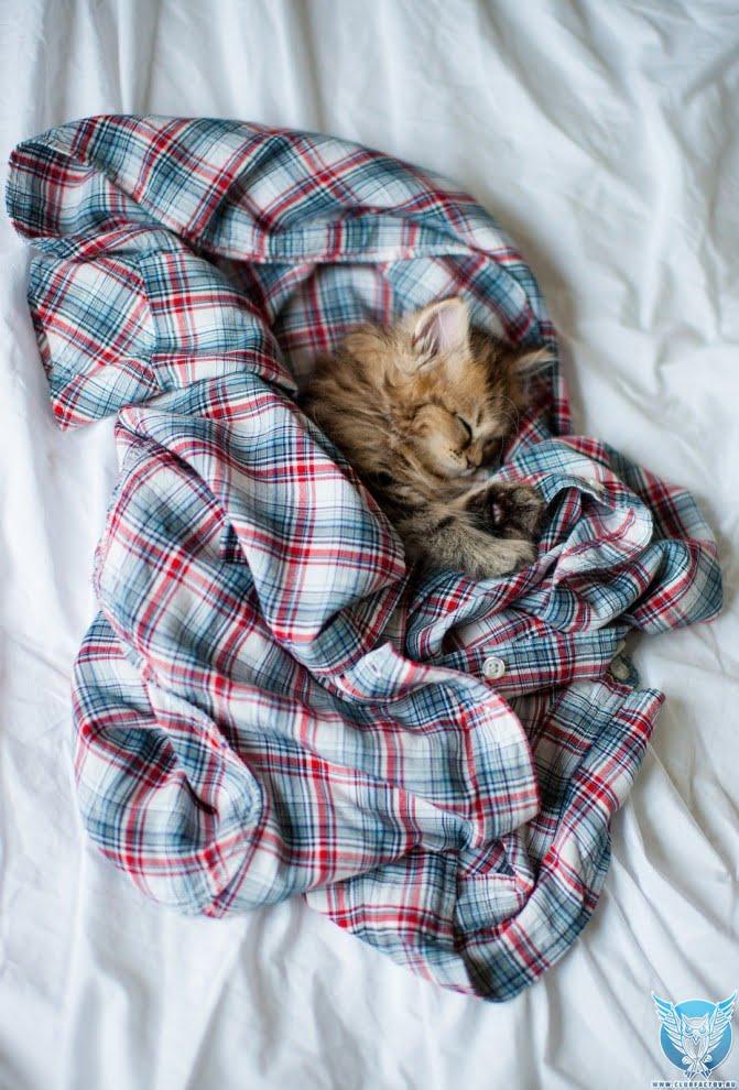 новые фото кошки Дэйзи