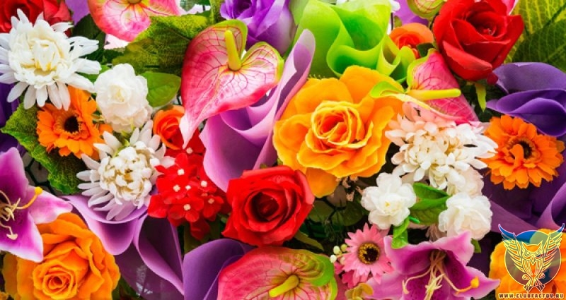 Самые красивые и необычные цветы мира