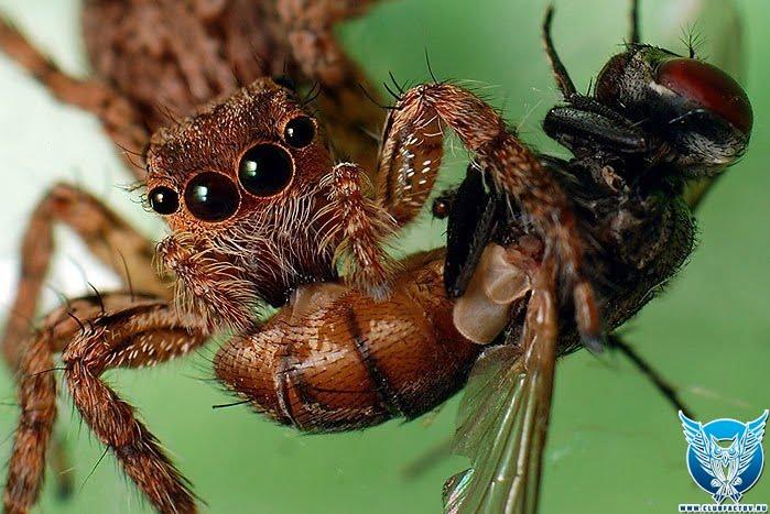 про паука как мух ловит